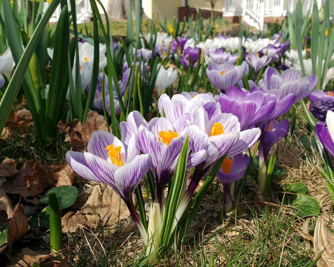 3 Ways To Get Your Garden Ready for Spring