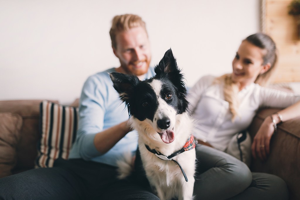 Essential Things to Consider While Moving with Pets